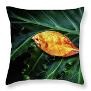 Life Cycle Still Life Throw Pillow