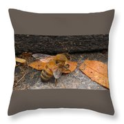 Lost In Direction Throw Pillow