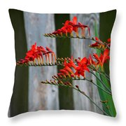 Lucifer Crocosmia By Fence Throw Pillow