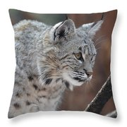 Lynx In A Crouch Ready To Pounce Throw Pillow