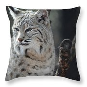 Lynx Looking Around At His Environment Throw Pillow