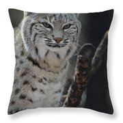 Lynx Perched In A Tree Throw Pillow