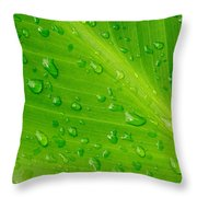 Macro Closeup Of Waterdrops On A Leaf Throw Pillow