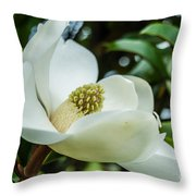 Magnolia Bloom IIi Throw Pillow