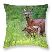 Maine White Tailed Deer Throw Pillow