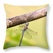 Male Migrant Hawker Throw Pillow