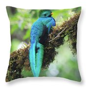 Male Quetzal Throw Pillow