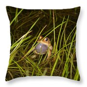 Male Toad Throw Pillow