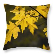 Maple Leafs Of Yellow Throw Pillow