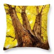 Maple Tree Portrait 2 Throw Pillow