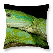 Marchs Palm Pitviper Throw Pillow