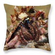 Marine Hermit Crab Throw Pillow