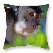 Mauritian Cynomolgus Macaques In The Wild Throw Pillow