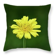 Meadow Salsify Throw Pillow