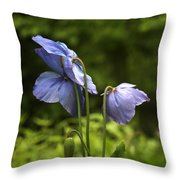 Meconopsis Mrs Jebb Throw Pillow