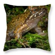 Mehu�n Green Frog Throw Pillow