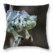 Mellers Chameleon Portrait Throw Pillow