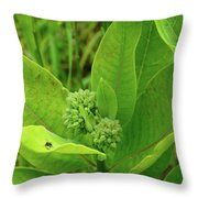 Milkweed Flower Buds  Throw Pillow