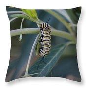 Monarch Catterpillar  Throw Pillow