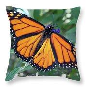 Monarch - Perfection Throw Pillow