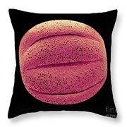 Monarda Didyma Pollen Grains, Sem Throw Pillow