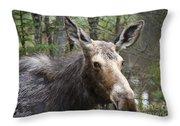 Moose - White Mountains New Hampshire Usa Throw Pillow