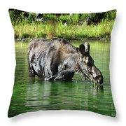 Moose In The Elk Creek Beaver Ponds Throw Pillow