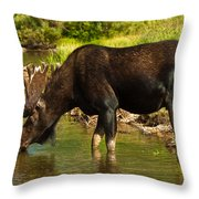 Moose Throw Pillow by Sebastian Musial