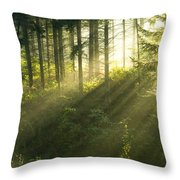 Morning Light Iv Throw Pillow
