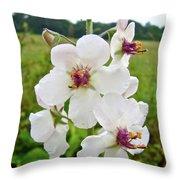 Moth Mullein Wildflowers - Verbascum Blattaria Throw Pillow
