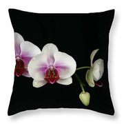 Moth Orchid 3 Throw Pillow