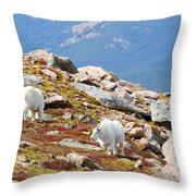 Mountain Goats On Mount Bierstadt In The Arapahoe National Forest Throw Pillow