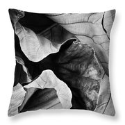 Mounts Botanical Garden 2363 Throw Pillow