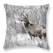 Mule Deer In Winter In The Pike National Forest Throw Pillow