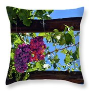 Napa Valley Inglenook Vineyard -2 Throw Pillow
