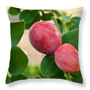 Natal Plums On Branch Throw Pillow