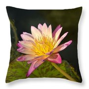 Natures Brilliance Throw Pillow