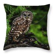 Neighborhood Watch 2 Throw Pillow