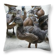 New Feathers Throw Pillow