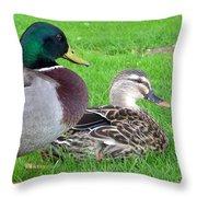 New Zealand - Mallard Ducks Throw Pillow