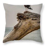 Gull On Driftwood Throw Pillow
