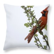 Northern Cardinal Portrait Throw Pillow