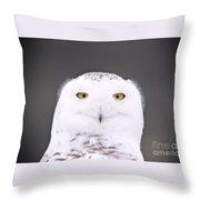 Snowy Owl 3256 A.k.a. Smiling Owl Throw Pillow