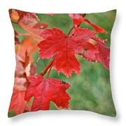 Ohio Autumn1 Throw Pillow