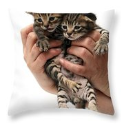 One Week Old Kittens Throw Pillow