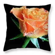 Orange Peach Rose Throw Pillow by Tracy Hall
