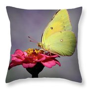 Orange Sulphur Butterfly Portrait Throw Pillow