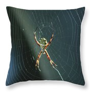 Orb Weaver Spider And Web Throw Pillow