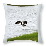 Osprey Fishing In The Afternoon Throw Pillow