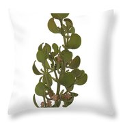 Pacific Mistletoe Throw Pillow